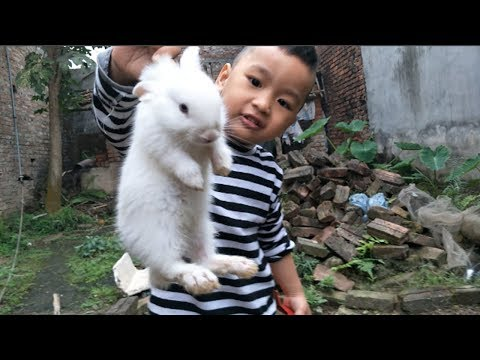 Cute Baby And Bunny: Outside Playing And Find Out Two Baby Rabbits - Cute Babies & Animals