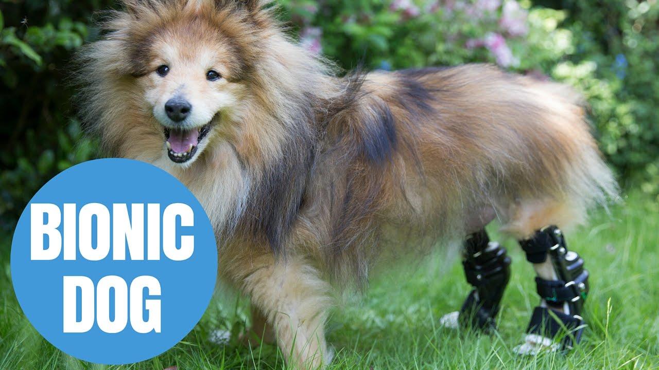 Bionic Pets - Posts | Facebook