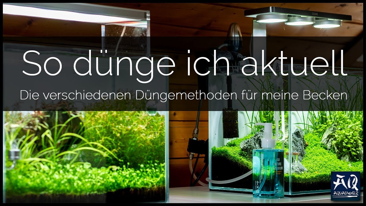 Aquarium pflanzen düngen hausmittel