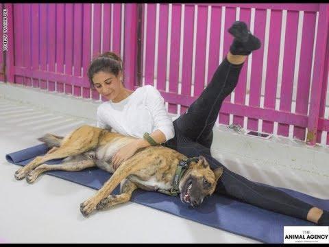 صرعة جديدة لممارسة الرياضة في دبي..مع الكلاب  - 12:53-2018 / 9 / 12