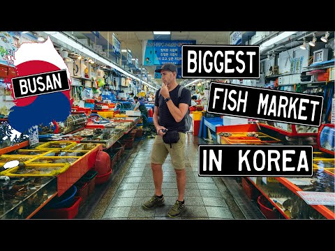 We visit Jagalchi & Gukje Markets in BUSAN, KOREA