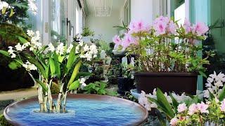 꽃향기 가득한 베란다정원 꾸미기 인테리어, 철쭉꽃 긴기…