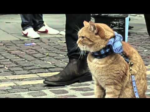 Уличный кот по имени Боб / A Street Cat Named Bob (клип / clip)