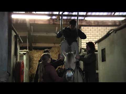 Paardrijden met de Surehands tilbeugel