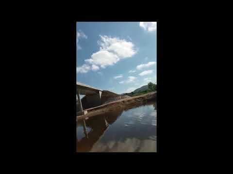 Itiúba: Jovem flagra homem matando cães recém nascidos por afogamento; vídeo