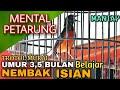Murai Trotol Gacor Prospek Mental Petarung Usia   Bulan Belajar Nembak Isian  Mp3 - Mp4 Download