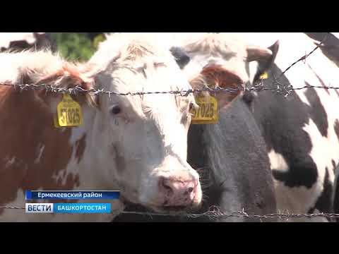 Новый молочный комплекс в Башкирии будет производить 22 тысячи тонн молока высшего сорта