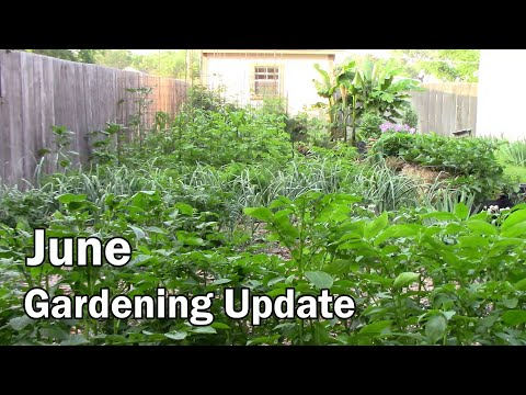 June Gardening Update and Tour – Lots of Tomatoes and Peppers Setting