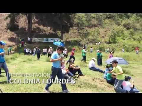 REFORESTACIÓN EN COLONIA LOURDES, ZONA 16