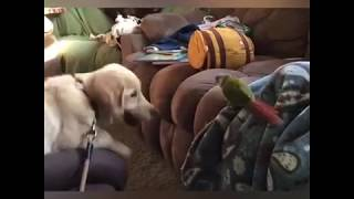 Funny Dogs vs birds Compilation