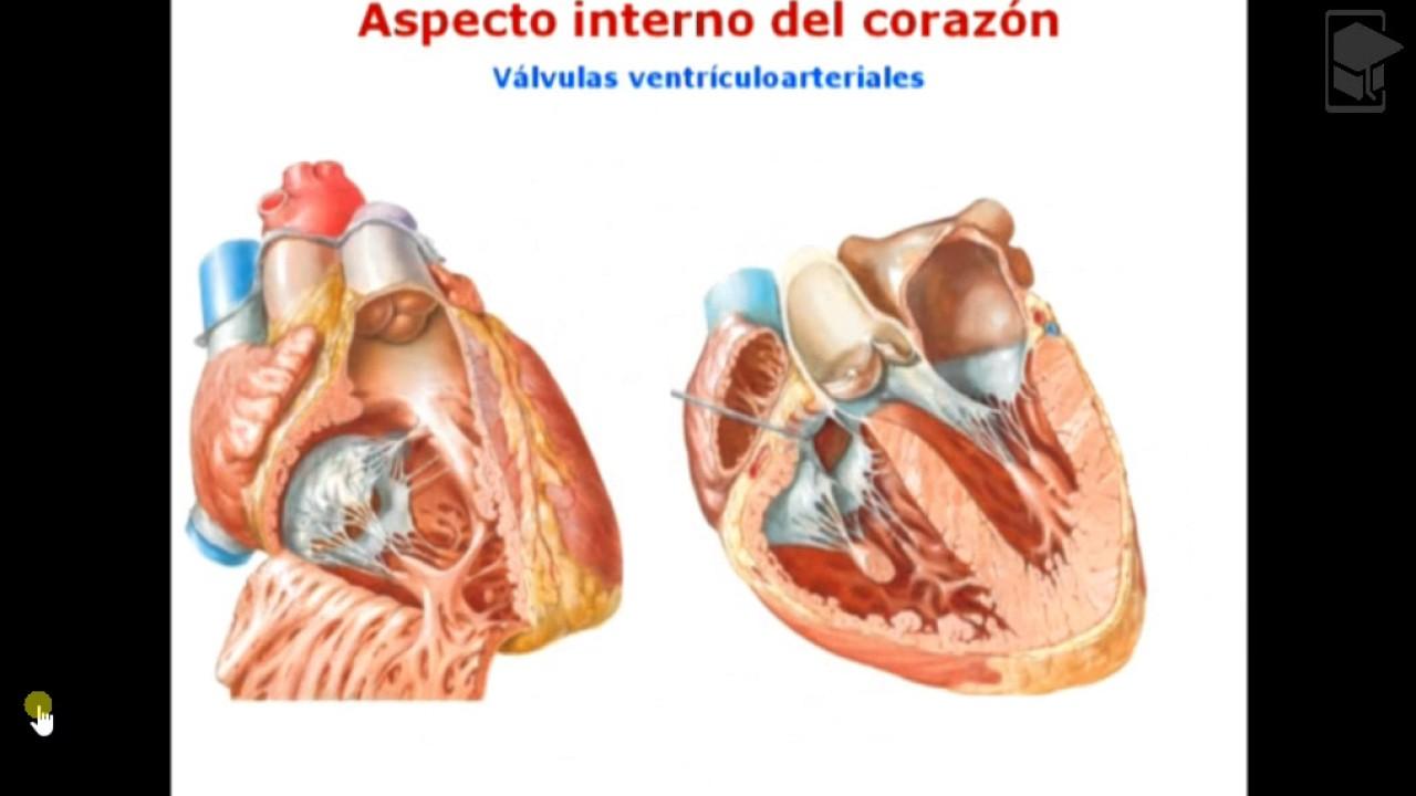 1. Anatomia Cardiaca 2016. INSTITUTO NACIONAL DE CARDIOLOGÍA - YouTube