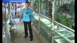 Семейная пара из Днепропетровска превратила дом в аквариум