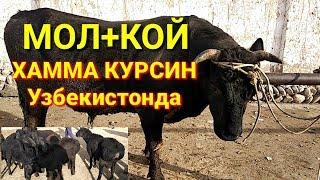Мол Бозордаги холат БУНИ ТЕЗ КУРИНГ