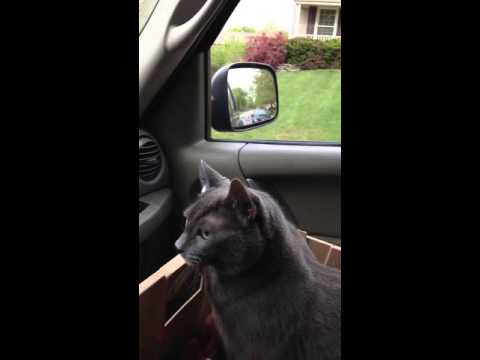 """Scared cat says """"we're going?"""" On way to vet"""
