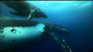 DOLPHINS & WHALES: TRIBES OF THE OCEAN 3D