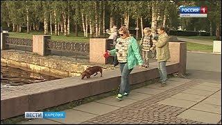Насколько законопослушны заводчики собак в Петрозаводске