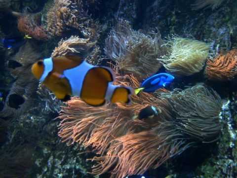 La Rochelle France Aquarium
