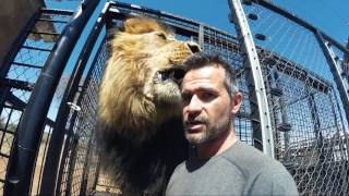 It's MOVING Day! - Part 1 | The Lion Whisperer