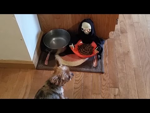 Owner Pranks Dog With Halloween Candy Bowl | Pet Pranks