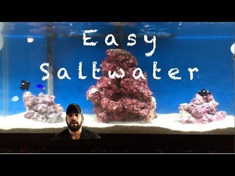 Saltwater aquarium setup how to start a saltwater fish for Starting a saltwater fish tank