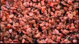 How Its Made   Raisins Discovery Channel