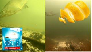 Кошачий корм или Цедра лимона Реакция рыбы Подводная съемка