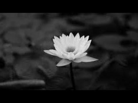 PGHH: 070 Phật Ở Đuôi Cồn