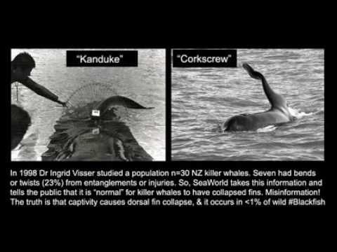 orcas in captivity essay help