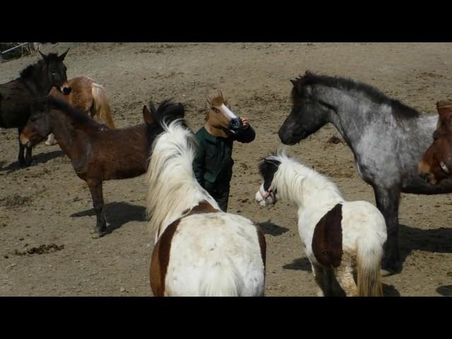 馬マスクをして馬の群れに入ってみました