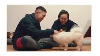 [AOMG PetTube] EP 01 : 로꼬 (Loco) x 라떼 (Latte)