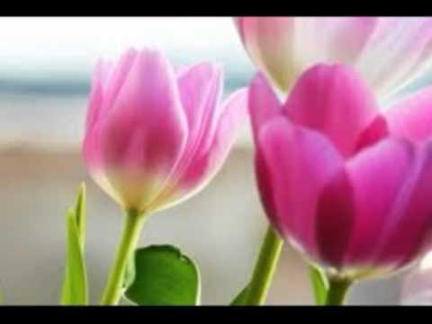 Hamen Kya Khabar Thi [Full Song] (HD) - Kartvaya