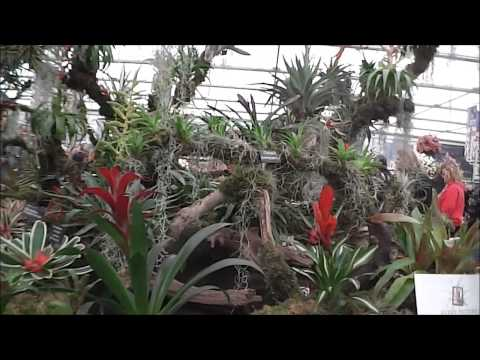Chelsea Flower Show 2013 Pavilion Every Picture Bromeliads