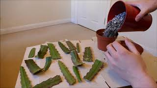 Epiphyllum Cactus, Pruning And Cuttings