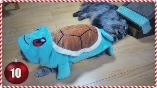 My Cats Try the Squirtle Costume | Vlogmas Day 10