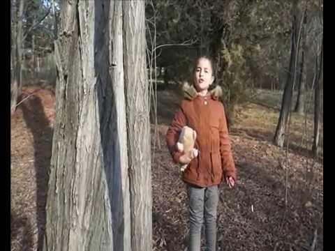 Изображение предпросмотра прочтения – СофияШукерская читает произведение «Свинья под дубом» И.А.Крылова
