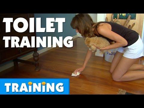 How To Toilet Train Your Puppy | Bondi Vet