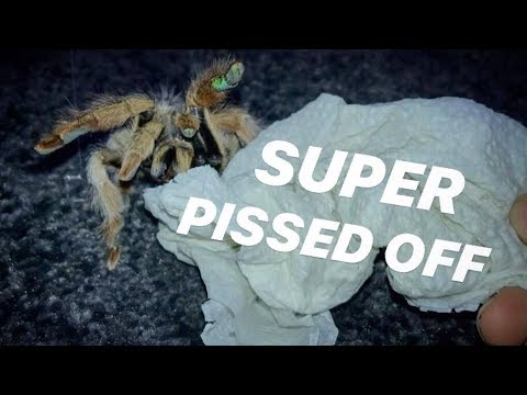 UNBOXING An ANGRY Blonde TARANTULA ~ She's ACTING WEIRD !!!