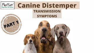Canine Distemper In Dogs: Intro, Transmission, Symptoms | Dog Seizure (Part1)