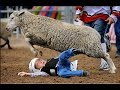 When Angry Sheep Attack Compilation