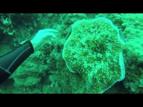 Scuba Diving at Mele Island / Hideaway, Vanuatu