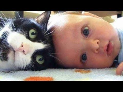Sevimli Kedi Ve K 246 Pekler Bebekleri Seviyorum Derleme 2015 Yeni Hd Youtube