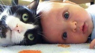 Sevimli Kedi Ve Köpekler Bebekleri Seviyorum. Derleme 2015 [Yeni Hd]
