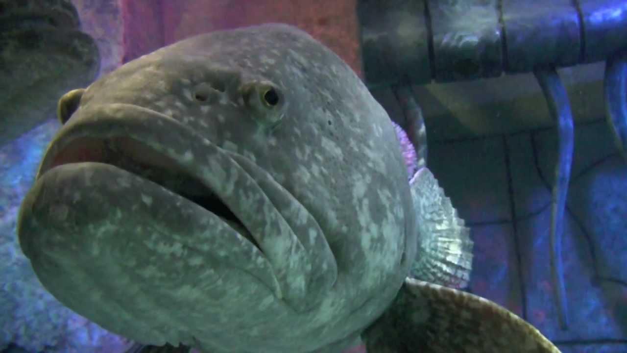 Dubai Aquarium Hotel