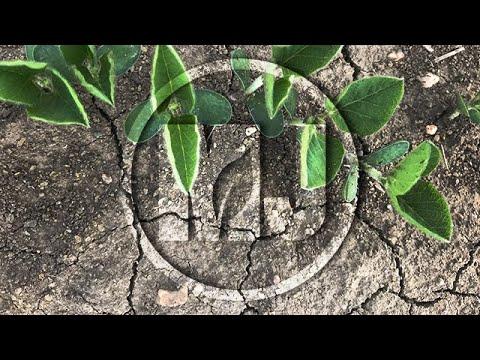 Above Soil Biomass - Paul Jasa - October 12, 2018