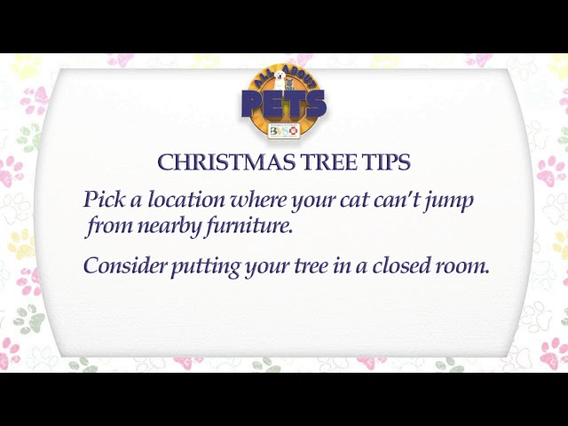 All About Pets - 12/14/17 Cats & Christmas Trees, Alayna Alford, DVM, CCRP, CHT-V