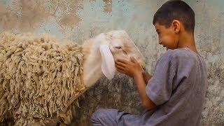 الفقير وخروف العيد اللهم لا تحرم فقيرا من فرحة العيد