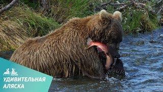 Удивительный животный мир Аляски