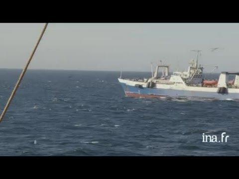 Mauritanie : pêche en haute mer