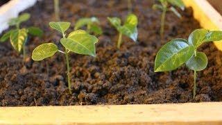 3 Designs - Pallet Wood Seed Trays & Propagator. Brico Plateaux De Semences. Bandejas De Semillas