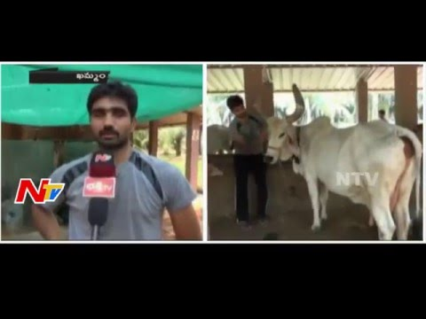 Software Engineer Harikrishna Follows Natural and Organic Methods of Farming | NTV